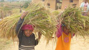 Conférence sur Madagascar avec Germin'Actions @ Salle Georges Brassens